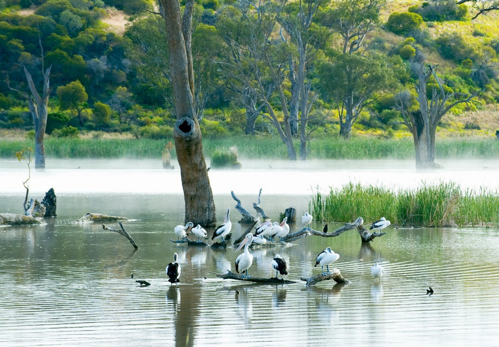 Birds on the River Murray