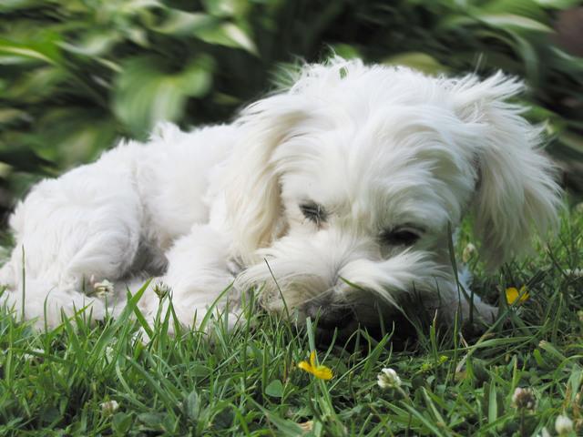 Pets on Holiday > Hints & Tips > Caravan and Camping
